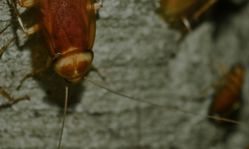 Worried About an Infestation? Call the Leading Bed Bug Exterminator in Kalamazoo